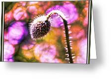 Colour Blast Greeting Card