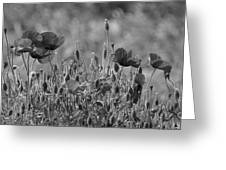 Colour Blind Poppies 2 Greeting Card
