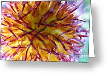 Colour Convolution Greeting Card