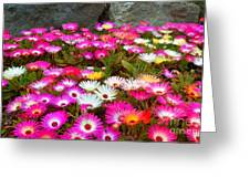 Colourful Flowers Greeting Card
