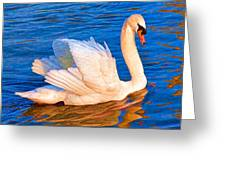 Colourful Swan Greeting Card