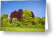 Colourful Trees Greeting Card