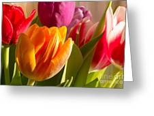 Colourful Tulips In Sunlight Greeting Card