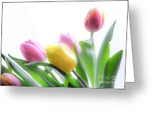 Colourful Tulips That Are Digitally Softened Greeting Card