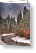 Colours Of Winter Greeting Card by Juli Scalzi