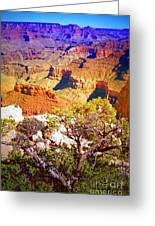 Colours Within The Canyon Greeting Card by Tara Turner