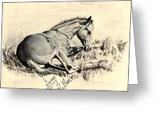 Colt Laying In Grass Greeting Card