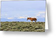 Colt On White Mountain Greeting Card