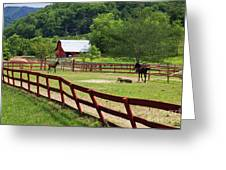 Colts On A Farm Greeting Card