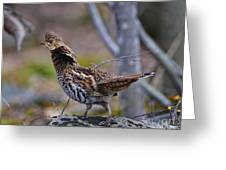 Coltsfoot Ruffed Grouse Greeting Card