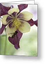 Columbine And The Bee Greeting Card