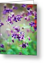 Columbine (aquilegia Atrata) Greeting Card