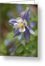 Columbine (aquilegia X Hybrida 'swan Blue And White') Greeting Card
