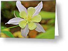 Columbine Charlie's Garden Greeting Card