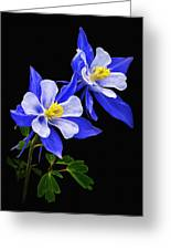 Columbine Duet Greeting Card