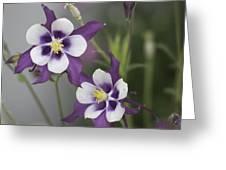 Columbine Duo Greeting Card