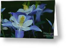 Columbine Family Greeting Card