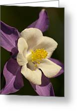 Columbine Floral Greeting Card