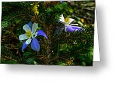 Columbine Flowers And Pine Tree Greeting Card