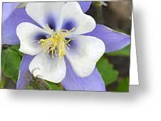 Columbine  Greeting Card