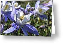 Columbine Wildflowers Greeting Card