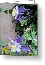 Columbines Exquisite Blooms Greeting Card