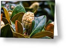 columnar Southern magnolia Greeting Card
