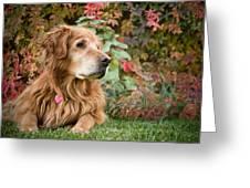 Comanche Autumn - Golden Retriever - Casper Wyoming Greeting Card