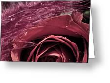 Combo Platter Greeting Card