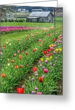 Come See Tulips  Greeting Card
