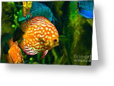 Come Swim With Us  Greeting Card
