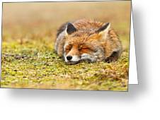 Comfortably Fox Greeting Card