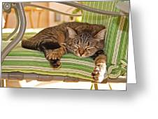 Comfy Kitty Greeting Card