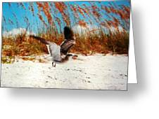 Windy Seagull Landing Greeting Card