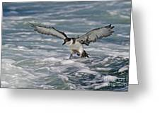 Coming In For Landing... Greeting Card