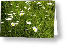 Coming Up Daisy's Greeting Card