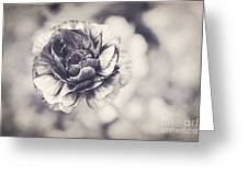 Coming Up In Black And White Greeting Card