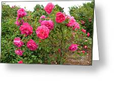 Coming Up Rosy Greeting Card