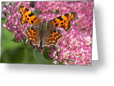 Comma 2 Greeting Card