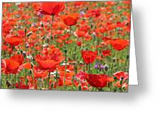 Commemorative Poppies Greeting Card