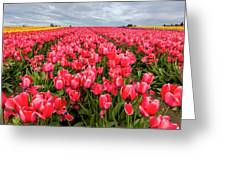Commercial Tulip Field In Bloom Greeting Card