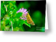 Common Banded Skipper Greeting Card