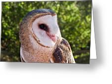 Common Barn Owl 10 Greeting Card
