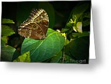 Common Blue Morpho Moth Greeting Card