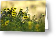 Common Brighteyes Natural Bouquet Greeting Card