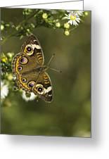 Common Buckeye 1 Greeting Card