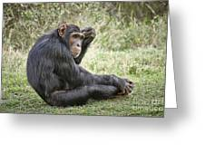 Common Chimpanzee  Pan Troglodytes Greeting Card