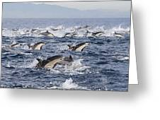 Common Dolphins Surfacing San Diego Greeting Card by Richard Herrmann
