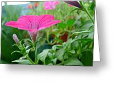 Common Garden Petunia Flower Greeting Card
