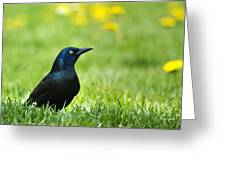 Common Grackle Greeting Card by Christina Rollo